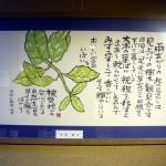 絵手紙展 寺井直江・協賛 町家案山子・タンポポの会-26