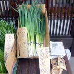 第11回 季節の野菜市開催-3