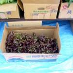 第11回 季節の野菜市開催-2