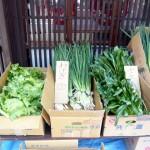 第11回 季節の野菜市開催-1