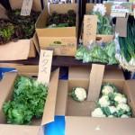 第12回 季節の野菜市開催-2
