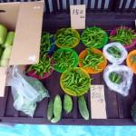 第16回 野菜市2013.9.8-3